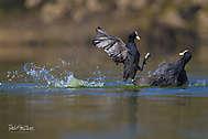 Kranichvögel