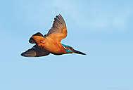 Eisvogel-Flug (BIF)