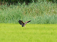 Landung im Reisfeld